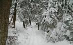 Aufstieg durch den verschneiten Wald