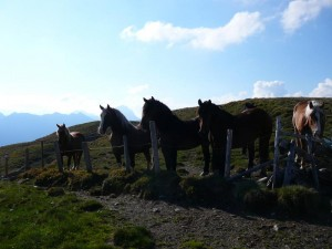 Wunderschöne Pferde am Wiesboden