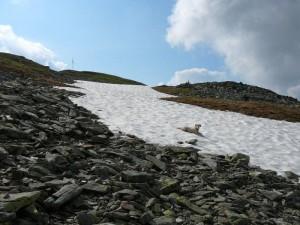 Schneefeld kurz vorm Gipfel Steinbergstein, eine willkommene Abkühlung!!