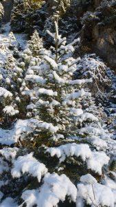 008-winterwonderland